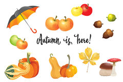 Set of autumn objects. Pumpkins different types, mushrooms, umbrella, apples and fall leaves. Vector illustration collection Royalty Free Stock Photos