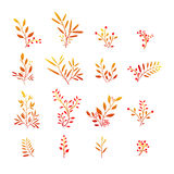 Set of autumn plant elements. Bouquets, kits Royalty Free Stock Images