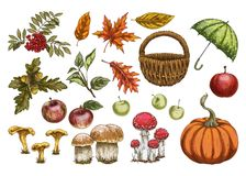 Set of in autumn style. Leaves, acorns, berries, apples, mushrooms, pumpkin Isolated on white background. Set of in autumn style. Leaves, pine cones, acorns and royalty free illustration