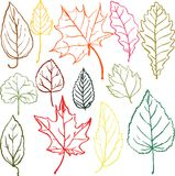Set of autumn and summer leaves Stock Photos