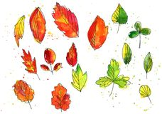 Set of autumn and summer leaves in watercolor Royalty Free Stock Photos