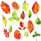 Set of autumn and summer leaves in watercolor Stock Images