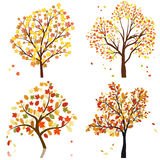 Set  autumn tree Royalty Free Stock Photos
