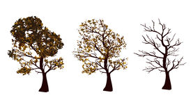 Set of autumn trees. On white background. Vector illustration. Horizontal location Royalty Free Stock Photo
