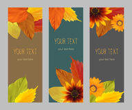 Set autumn vertical banners. Set of vertical banners with yellow, orange, red autumn leaves, fall colors on a dark background, template, vector illustration Stock Photography