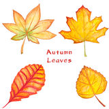 Set of autumn watercolor maple, linden and other raster leaves Royalty Free Stock Image