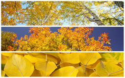 Set of autumnal background Stock Photos
