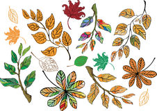 Set of autumnal leaves Royalty Free Stock Images