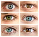 Set av 6 verkliga olika öppna ögon/enormt format Fotografering för Bildbyråer