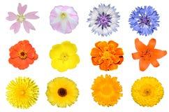 Set av blommor Fotografering för Bildbyråer