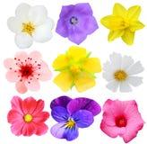 Set av blommor Royaltyfri Foto