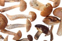 Set av champinjoner Arkivbild