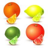 Set av citrusfrukt vektor illustrationer
