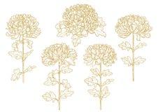 Set av denfärgade skisserade chrysanthemumen Arkivfoton