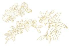 Set av en-färgade skisserade orchids Royaltyfri Fotografi