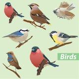 Set av fåglar Arkivbilder