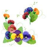 Set av försiktigt blom- Arkivfoto