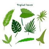 Set av gröna tropiska leaves Stock Illustrationer