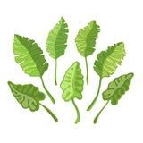 Set av gröna tropiska leaves royaltyfri illustrationer