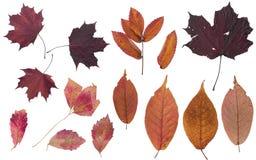 Set av h?stleaves F?rgar av h?st Herbarium av ljusa färger fotografering för bildbyråer