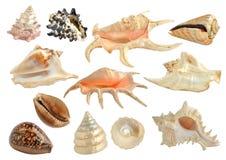 Set av havsskal Royaltyfri Bild