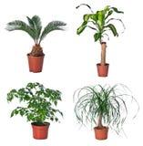 Set av inomhus växter Arkivbilder