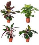Set av inomhus växter Royaltyfria Bilder