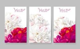 Set av kort för pionblommahälsning Arkivfoto