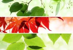 Set av naturliga säsongsbetonade baner med leaves Fotografering för Bildbyråer