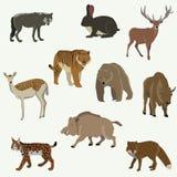 Set av skogdjur Royaltyfri Bild