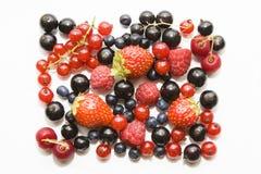 Set av wild berryes Royaltyfria Bilder