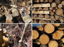 Set av wood texturer Arkivbilder