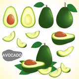 Set of avocado fruit in various styles vector format Royalty Free Stock Photo