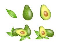 Set of avocado illustration Royalty Free Stock Photography