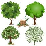 Set Bäume Stockbilder