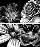 Set of backgrounds with flowers, hand-drawing. Stock Image