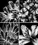 Set of backgrounds with flowers, hand-drawing. Stock Photos