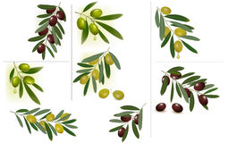 Set of backgrounds with green and black olives. Royalty Free Stock Photo