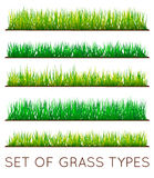 Set of Backgrounds Of Green Grass, Isolated On White Background,. Vector Illustration Stock Photo