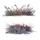 Set of backgrounds from lake grass. Isolated on white background. royalty free stock image
