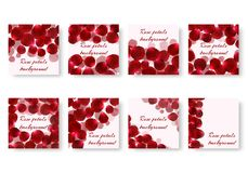 Set of backgrounds with rose petals. A collection of square backgrounds with rose petals for a romantic greeting design. Vector illustration with a floral Royalty Free Stock Photography