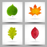 Set of backgrounds with triangular leaves Stock Photo