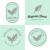 Set of badges, banner, labels and logos for Organic natural and fresh food product with hand drawn leaf. Packaging design. Stock Photo