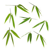 Set of bamboo green leaves isolated on white Royalty Free Stock Photo