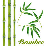 Set of bamboo plants and leaves. Objects for decoration, design on advertising booklets, banners, flayers Royalty Free Stock Photography