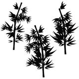 Set Bamboo tree tropical silhouette Vector illustration Stock Photography