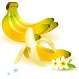 Set of bananas Royalty Free Stock Image
