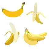 Set of bananas. Stock Images