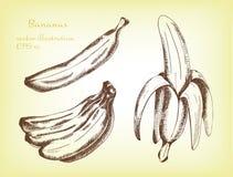Set banany owoc, ręka rysująca ilustracja Zdjęcia Royalty Free