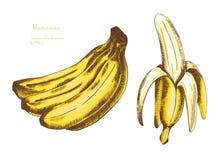 Set banany owocowi Obraz Stock